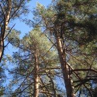 под весенним солнцем на опушке леса... :: helga 2015