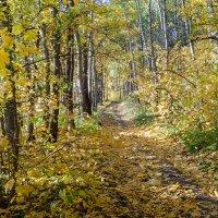 Листья жёлтые :: Александр Лихачёв