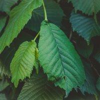 Зеленый :: Ivan teamen