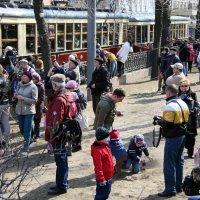 городские праздники-для трамвайчика :: Олег Лукьянов