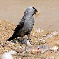 пригодится! :: linnud