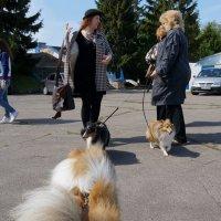DogShow. Зарисовки. :: Tatiana Golubinskaia