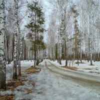 Серия...Лесными дорогами. :: Мила Бовкун