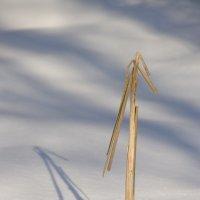 Снежно-солнечные часы :: Марина Грушина