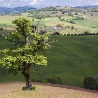 Пейзажи Тосканы :: Виталий Петухов