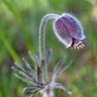 Я - травянистое растение... :: Mari Kush