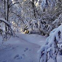 Мурманск. Фадеев ручей в феврале. :: kolin marsh