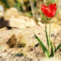 Весны стремительный бег :: Alexander