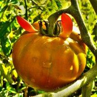 Рогатый помидор :: Алла Рыженко