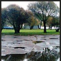 После дождя :: Виктор Никитенко