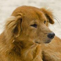Собака которая живёт на пляже :: Вячеслав Васильевич
