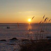 Закат над Белым морем. 28 марта. :: Елена Перевозникова