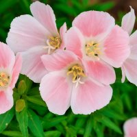 pink :: A.M. Photo