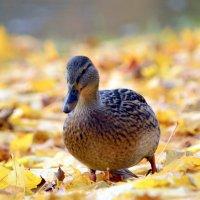 Осенью в парке :: Сергей