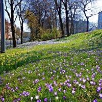 Цветочный мартовский рай! :: Galina Dzubina