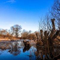 Облачное болото. :: Сергей Погарельский