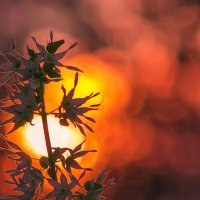 Тревожный цвет заката :: Владимир Шамота