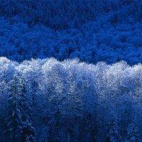 Лиана Николаева - Зима :: Фотоконкурс Epson