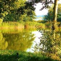 Голубые озера Калининграда :: Маргарита Батырева