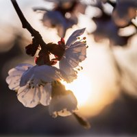 Весна :: ALLA Melnik