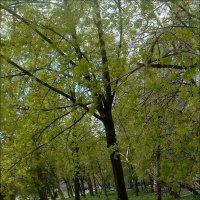Зелёный апрель :: Нина Корешкова