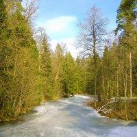 В лесу весна, а на речке зима! :: Лия ☼