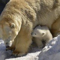 Герда с сыном. :: Светлана Винокурова