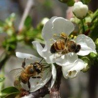Весна :: Gudret Aghayev