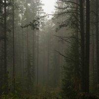доброе утро лес :: Владислав Попов