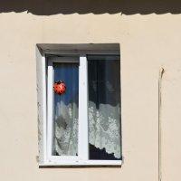 Весна, божьи коровки проснулись ... :: Petr Popov