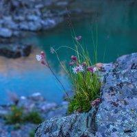 Цветы :: Андрей Поляков