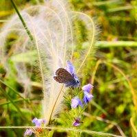 Бабочка :: Виктор Шандыбин