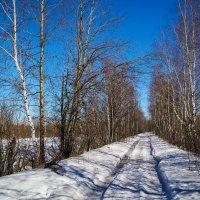Весна :: Андрей Дворников