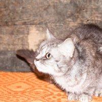 Кошечка ищет дом :: Виктория Коломиец