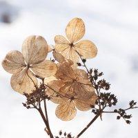 Осенние цветы весной :: Михаил Бабаков
