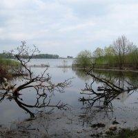 Весенний разлив :: Nyuta H