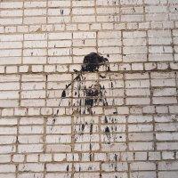 Портрет незнакомца со спины. :: Дмитрий Костоусов