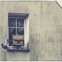 Окно. :: Юрий