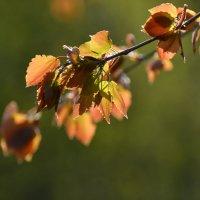 Весна :: Александр Филатов