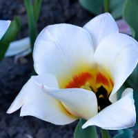 Цветы :: Евген Бурлак