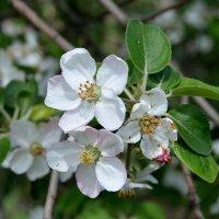 Весна пришла! :: Александр