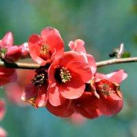 Апрельские цветы :: Ольга Голубева