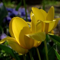 У нас весна! :: Наталья (D.Nat@lia) Джикидзе (Берёзина)