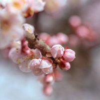 Весна... :: Владимир Натальченко