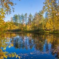 Лесное озерко :: Наталья Шкаева