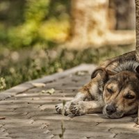собак :: Дарья Гутинская