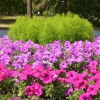 Цветочная клумба в парке :: Сергей Тагиров