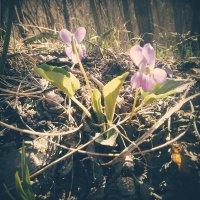 Flower 2 :: Ntalia Grey