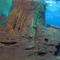 Затонувший корабль :: Вера Щукина