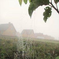 Сентябрьский туман :: Ольга Алеева